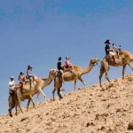 israel camel riding